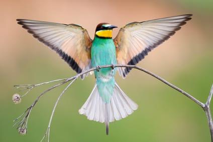 la-langue-des-oiseaux