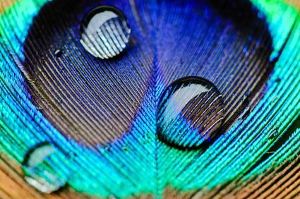 langue-des-oiseaux
