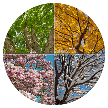 Vier Jahreszeiten