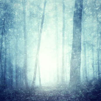 Dreamy snowfall in magical blue colored foggy forest. Beautiful Christmas and New Year Holiday winter snowy forest landscape. Heavy snowfall in magic foggy forest.